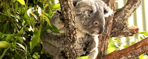 Billabong Koala and Wildlife Park