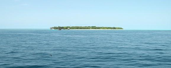 Heron Island : Le Paradis