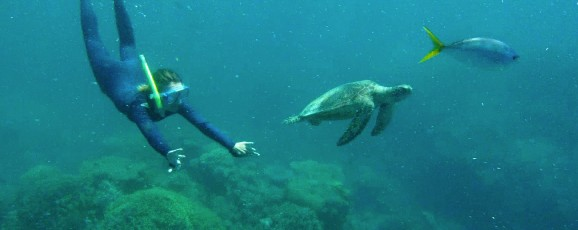 Snorkeling dans les Whitsundays