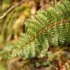 Egmont National Park