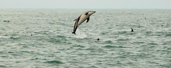 Kaikoura Marine Life