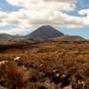 Randonnée sur le volcan Tongariro